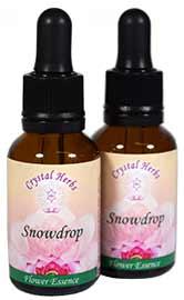Snowdrop Flower Essence Bottles