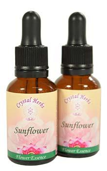 Sunflower Essence