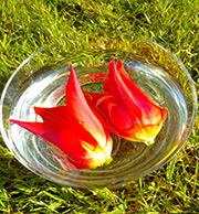Tulip - Making an Essence